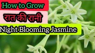 Video Grow  n care of Raat ki rani/ queen of night (Hindi  n Urdu) download MP3, 3GP, MP4, WEBM, AVI, FLV November 2017