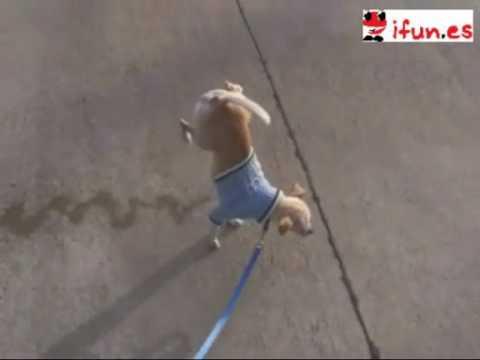 Perro meando a dos patas    Videos de humor, juegos gratis, chistes y fotos graciosas.4.mp4