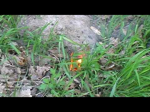 Nebezpečná tajemství Bořího lesa - Břeclav - Poštorná