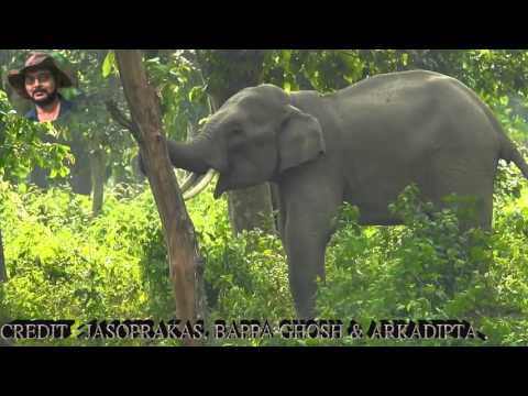 Elephants Natural Behavior From Close.