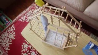 Wooden Ladder Playground - Bird (Budgie) Toy - Unboxing & Review HD
