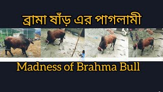 175 | ফিরে দেখা ২০১৮ | Madness Of Brahma Bull | Sadeeq Agro | ZbGH 2019