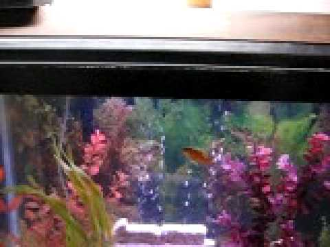 30 gallon fish tank aquarium on craigslist youtube for Craigslist fish tank