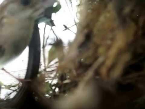 Mother bird feeding babies living in porch light.