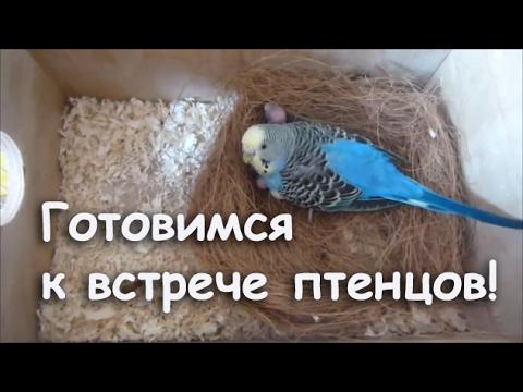 Как сделать гнездо для попугая
