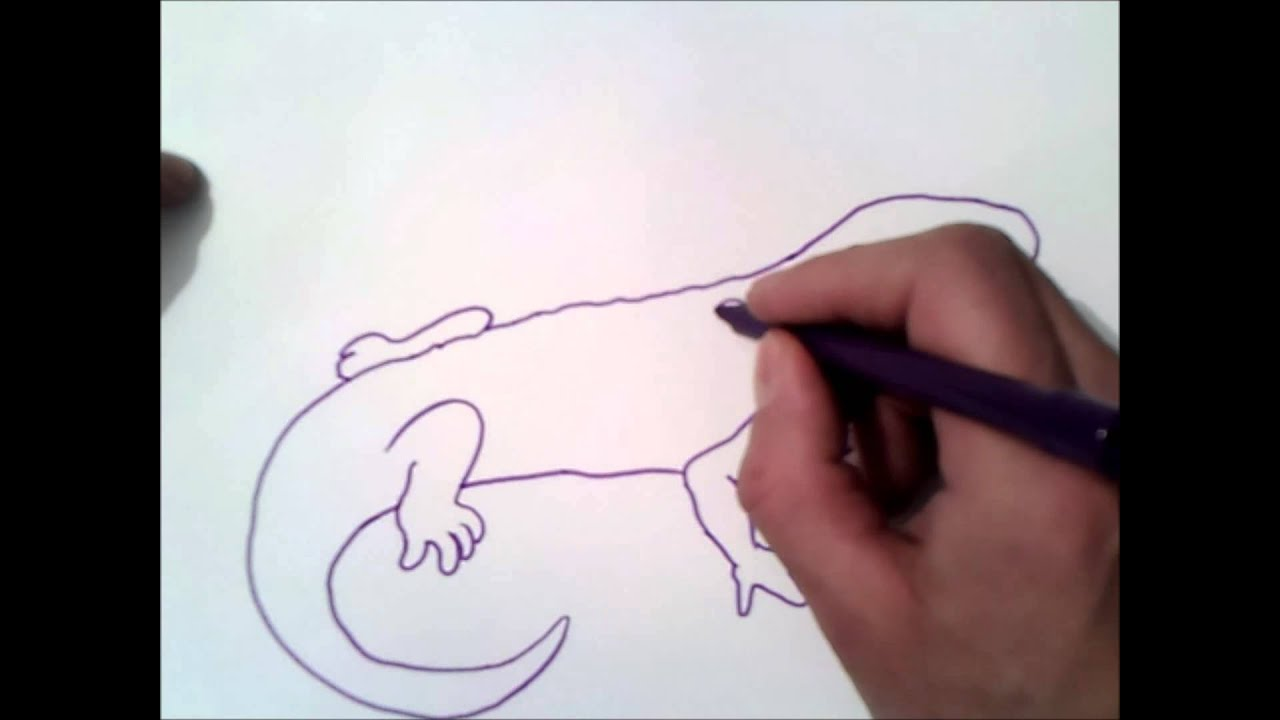 how to draw a salamander step by step | how to draw a salamander