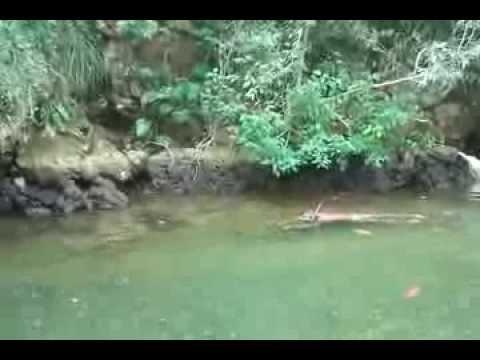 Pesca cubana in Rio Yumuri en Baracoa provincia de Guantanamo in Cuba