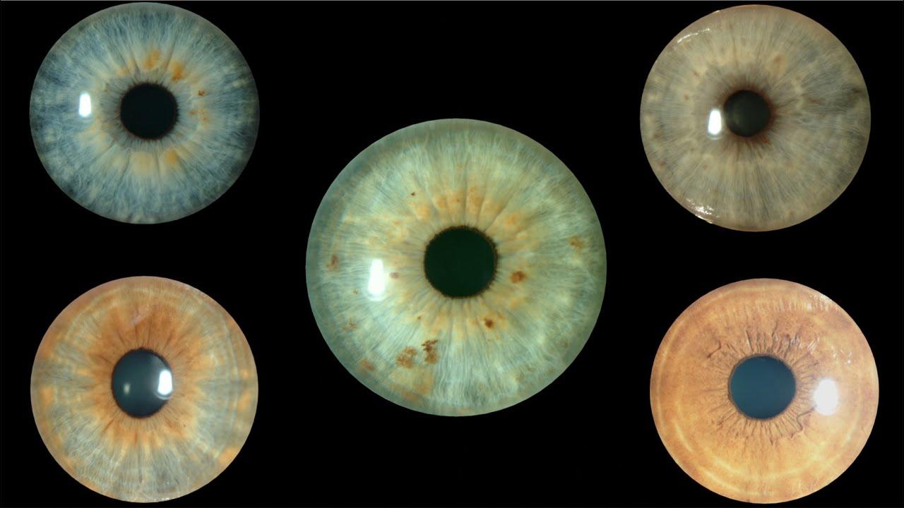 El color de los ojos ojos grises y verdes centro de - Colores verdes azulados ...