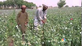 Nightly News  Opium Production Hits Record High in Afghanistan