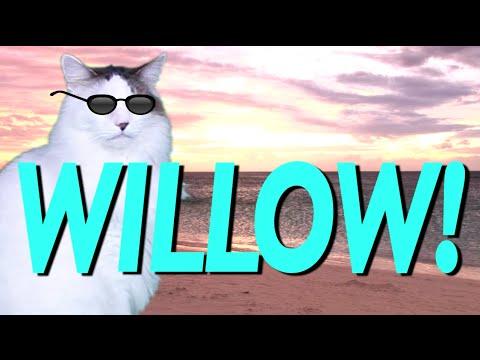 Happy Birthday Willow Epic Cat Happy Birthday Song