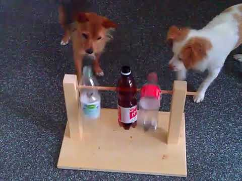Kopfspiele Für Hunde