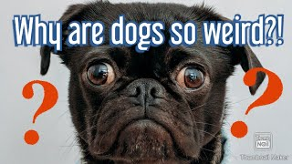 These dogs are strange! Try not to laugh!