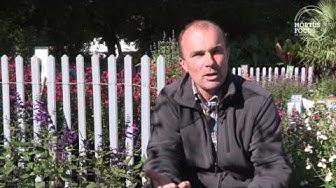 Conseil d'experts : comment cultiver les sauges arbustives