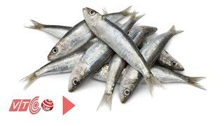 Loại cá nào tốt cho sức khỏe nam giới? | VTC