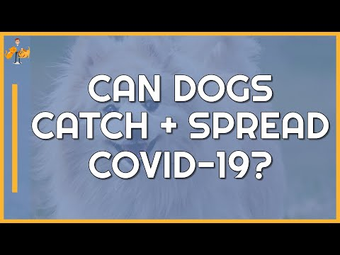 Coronavirus And Your Dog - Are They At Risk (or A Risk To You)?