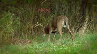 Planting a Scrape Tree - Deer Hunting Video Tips