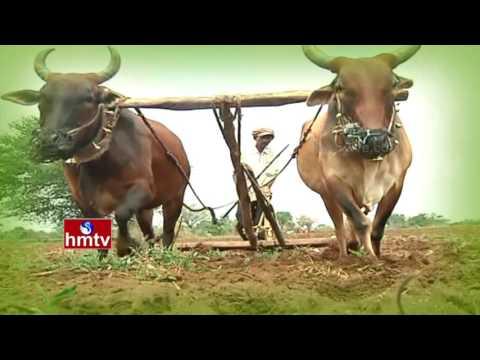 Nela Talli | CM KCR on Erravalli Massive Agriculture | Horticulture Crops in AP | HMTV