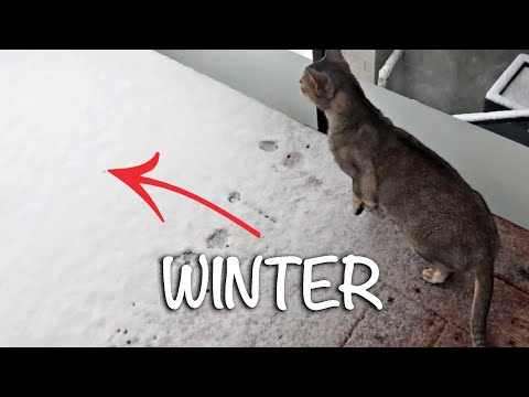 Abyssinian Cats Don't Like Winter | CUTE CAT CLEO