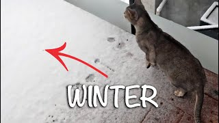 Abyssinian cats don't like winter