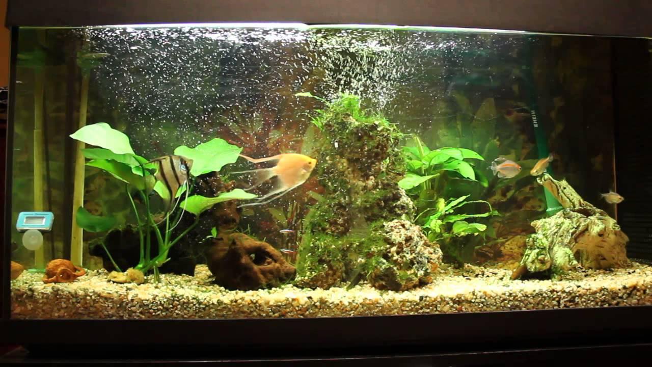 Mi acuario tropical de agua dulce youtube for Peces de agua dulce para peceras