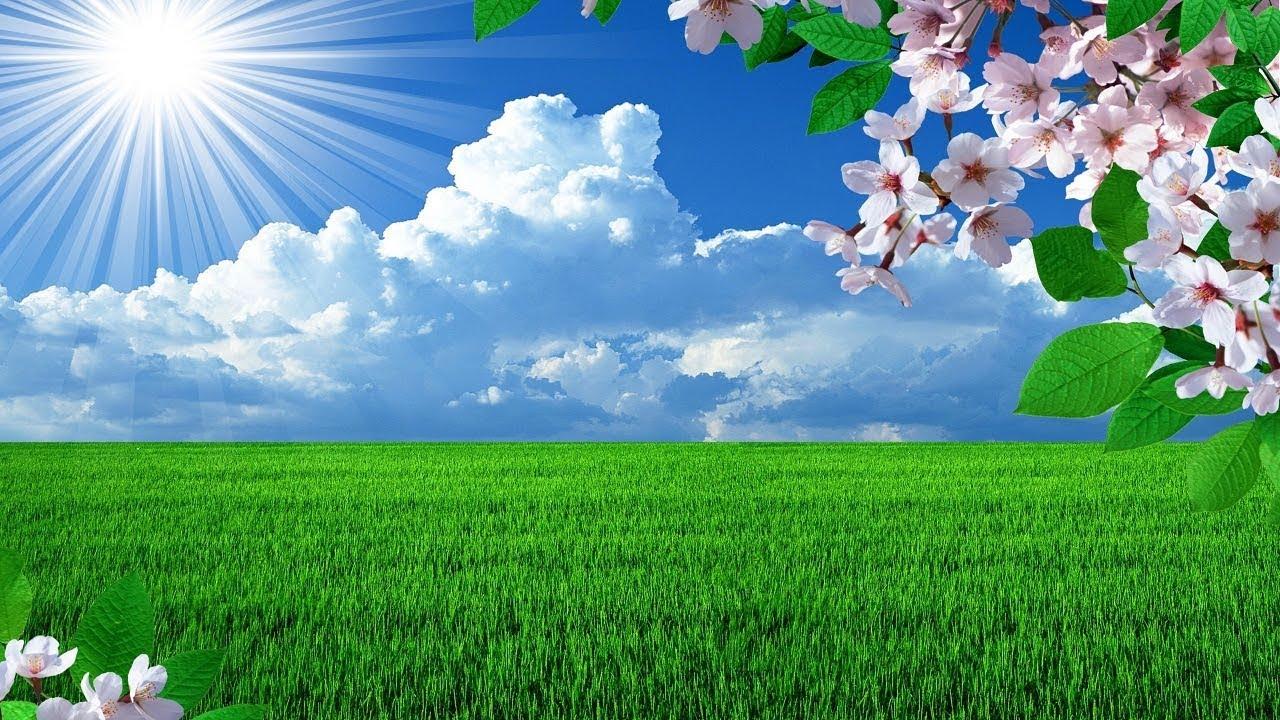 Beautiful green nature hope, you