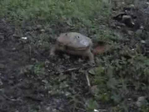Crazy Frog Real Life