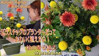 プラスチックのプランターだってかわいく植えたい🍁秋❕Make an Autumn Planter with Mums🌼