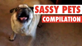 """World's Funniest"" Sassy Pets (Funny Compilation!)"