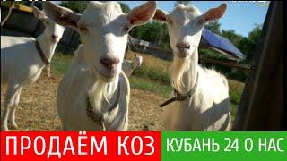 Продаём коз. Наши козы на канале Кубань 24.Отвечаю на вопросы. Новости 2-10 сентября 2020 г.