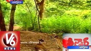Kothi Kathalu - Teenmaar News