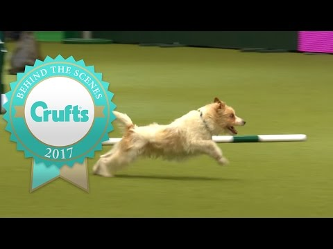 Meet Olly the Hilarious Jack Russell at Crufts 2017
