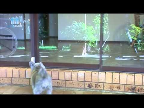 Autoslide Automatic Sliding Glass Patio Pet Door Youtube