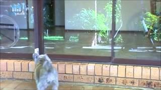 Autoslide Automatic Sliding Glass Patio Pet Door