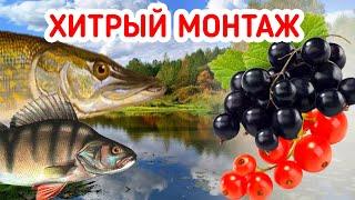 Ловля Щуки и Окуня НА СМОРОДИНУ Хитрый монтаж для проводки на ДЖИГ