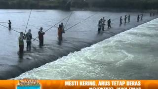 Unik Mancing di Musim Kering di Tengah Sungai Berantas yang Airnya Surut Wajah Indonesia 10 08