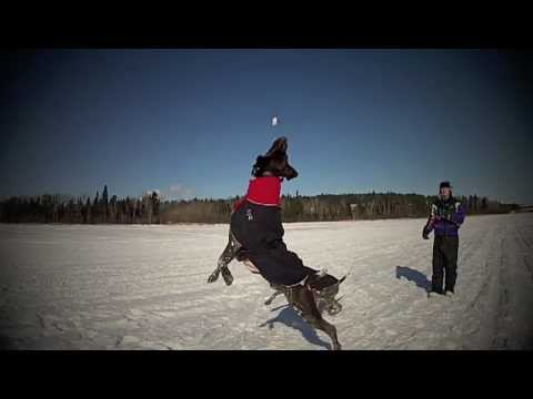 German Shorthaired Pointers On Ice – GoPro 120 FPS