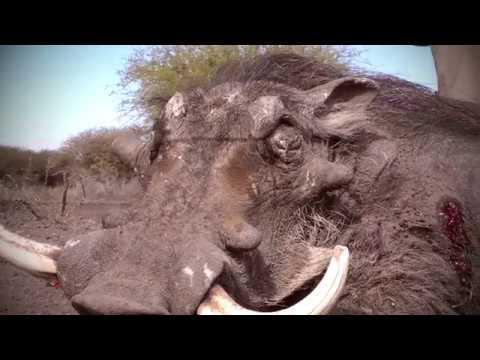 Cruiser Safaris - Joel Tavera Warthog Hunt