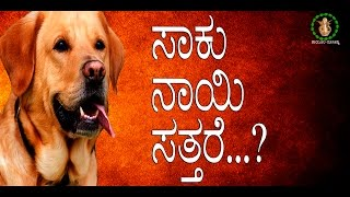 Astrology | Dog Death | Astrology | Ravi Shankar Guruji | Kannada Astrology| Thambula Jyothishya