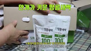 단백질음료 건강이든 땅콩새싹 레스베라트롤 함유