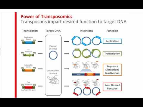 How Can Transposons Accelerate Your Genomics Research?