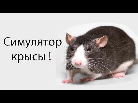 Симулятор крысы !