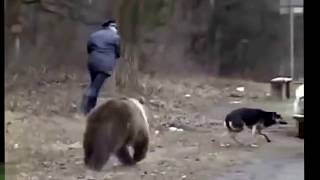 Русские и медведи   (Russians and Bears)