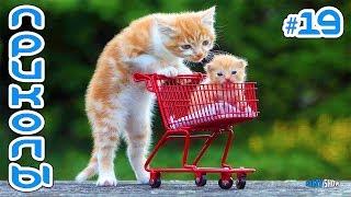 СМЕШНЫЕ КОТЫ И КОШКИ 2019 Приколы с котами до слез Забавные и смешные животные