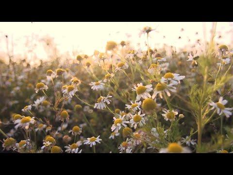 Relaxing Piano Music: Beautiful Nature, Relaxing Music, Sleep Music, Romantic Music ★125