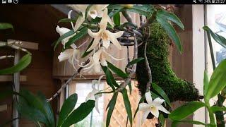 Орхидеи на блоке : ЗА и ПРОТИВ.