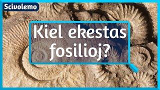 Kiel ekestas fosilioj?