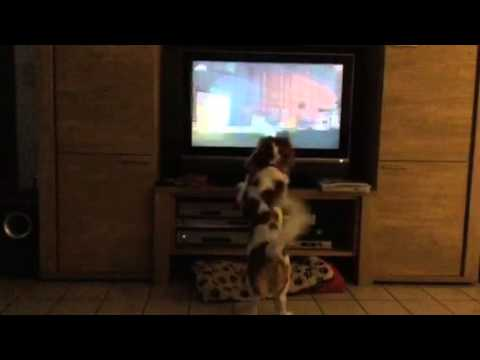Morgen - Why Do Dogs Love This Movie SO Much?!
