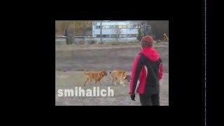 Собаки на Салтовке. Харьков.