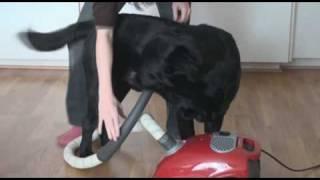 Dog vs vacuum cleaner 2.wmv