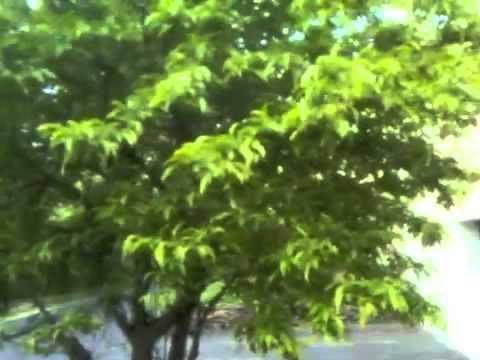 Cedar Apple Rust Treatment